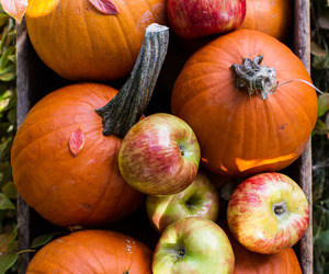 apples, autumn, and fall colors image