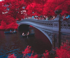 red, nature, and bridge image