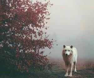 aesthetics, autumn, and photography image