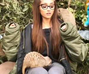 australia, meerkat, and sweet image