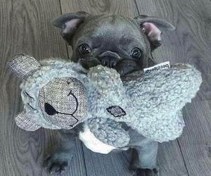 adorable, dog, and gray image