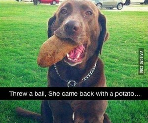 dogs, potato, and funny image