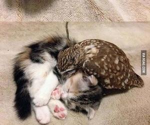 adorable, aw, and Awe image