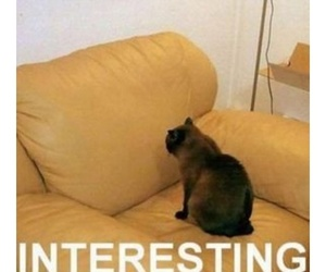 cat, funny, and interesting image