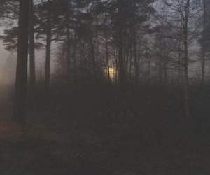 dark, forest, and alternative image