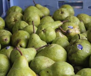 Benefits of fruits/ Beneficios de las frutas ♥