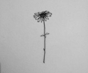flower and simple image
