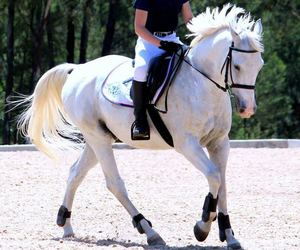 beautiful, dressage, and horse riding image
