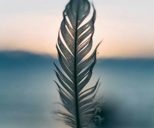 feather, nature, and wallpaper image
