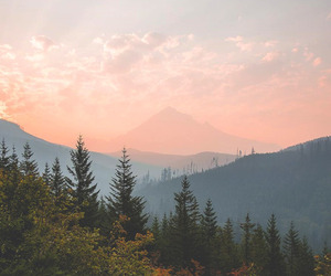 sky, forest, and nature image