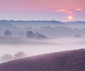 landscape, nature, and lavender image