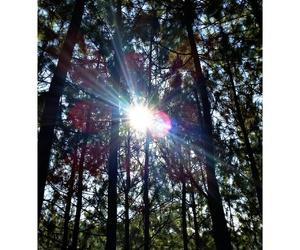 forest, summer, and eastjava image