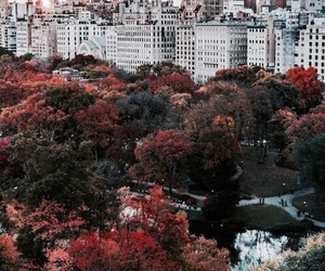 city, new york, and autumn image