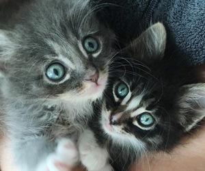 animals, beautiful, and sweet image