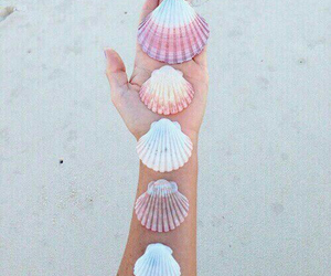 beach, sand, and shells image