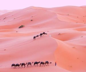 desert, pink, and camel image