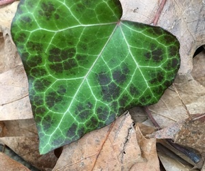 green, heart, and leaf image