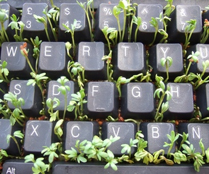 plants, keyboard, and green image