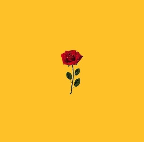 rose, yellow, and article image
