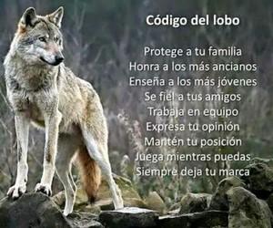 codigo and lobo image