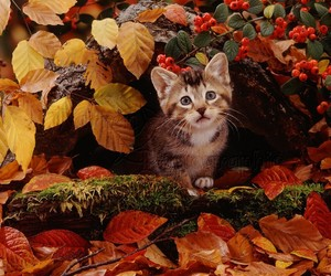 autumn and cat image