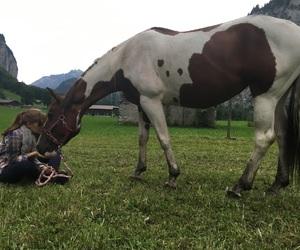 animal, horse, and pferd image