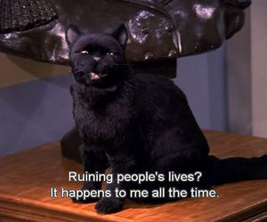salem, cat, and quotes image