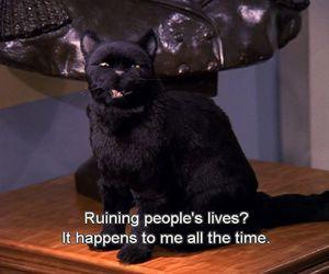 cat, salem, and sabrina the teenage witch image
