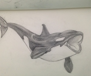 art, orca, and black and white image