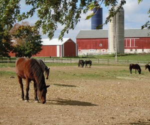 barn, country living, and pasture image