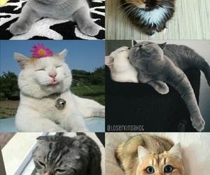 background, cat, and Gatos image