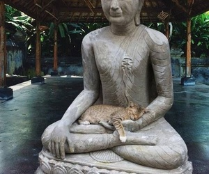 cat and Buddha image