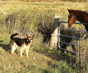animals, country life, and dog image