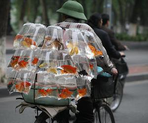 fish and goldfish image