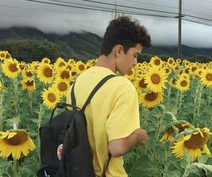 boy, yellow, and sunflower image