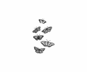 butterflies and feed divider image