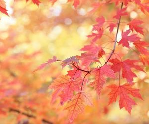 autumn, red leaves, and fall image