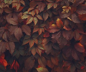 autumn, fall, and fall colors image