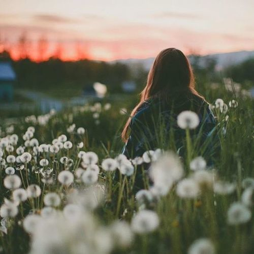 flowers, girl, and sunset image