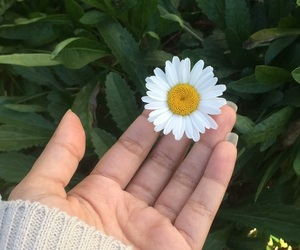 beautiful, brazil, and flower image
