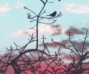 wallpaper, bird, and nature image