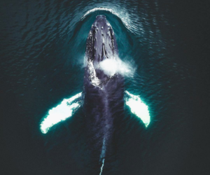 ocean, whale, and water image