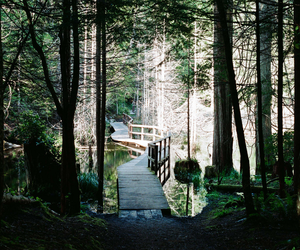 bridge, lake, and landscape image