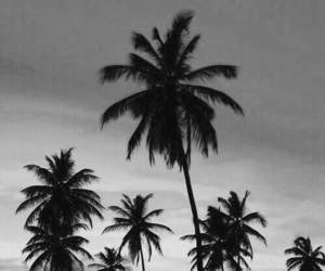 ???, aesthetic, and b&w image