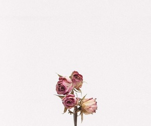 flowers, background, and tumblr image