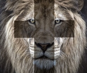 cross, backgrounds, and lion image