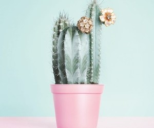 cactus, pink, and flowers image