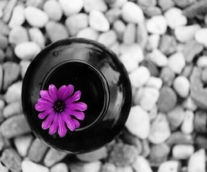 color, flower, and peace image