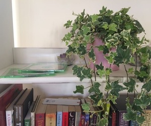 books, grunge, and plants image