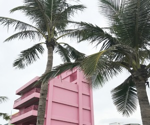 hualien, pale, and palm tree image